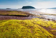 Low Tide in the Bay of Fundy reveals ocean floor. Five Islands Provincial Park: View of the Bay of Fundy at low tide Royalty Free Stock Image