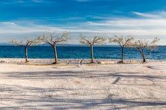 Five Isolated Trees On The Coastline - Croatia Stock Photos