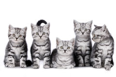 Five kitten isolated Royalty Free Stock Images