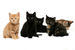 Five kittens. On a white background Royalty Free Stock Image