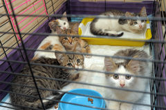 Five kittens. In a cage Stock Photo