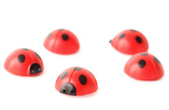 Five ladybugs isolated on white Royalty Free Stock Photos