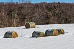 Five Large Rolled Hay Bales in Snowy Field stock image