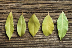 Five laurel leaves Royalty Free Stock Image