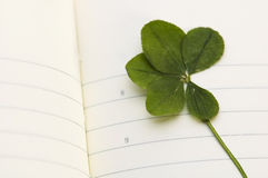 Five Leaf Clover and New Day. Stock Photo