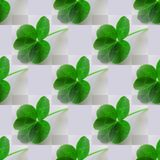 Five-leaf clover photo green on light gray Royalty Free Stock Image
