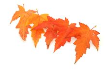 Five leaves Stock Image