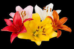 Five lilies Royalty Free Stock Image