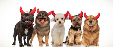 Five little cute dogs wearing red devil horns for halloween stock photo