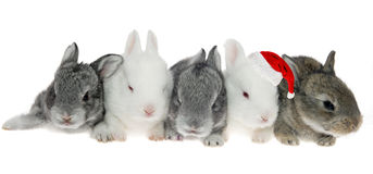 Five little rabbits in a row, one of Santa Kraus Stock Photo