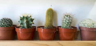 Five little succulent cactus plants on a shelf stock image