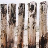 Five logs on the beach Stock Photography