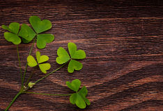 Five lucky shamrocks on a old wood Stock Images