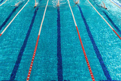 Five male swimmers racing against each other. In a swiming pool Stock Photography
