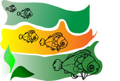 Five marine fish Stock Photos