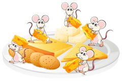 Five mice with cheese and biscuits Royalty Free Stock Image