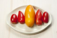 Five oblong tomatoes Stock Photos
