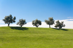 Five olives. At the top of a green hill Stock Photography