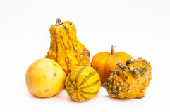 Five orange decorative pumpkins Royalty Free Stock Images