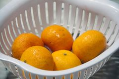 Five orange fruit in a white plastic basket. Orange is a round juicy citrus fruit with a tough bright reddish-yellow rind stock image