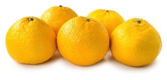 Five orange mandarin isolated Royalty Free Stock Image
