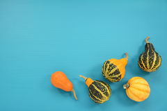 Five ornamental gourds and squash on a turquoise background Royalty Free Stock Images