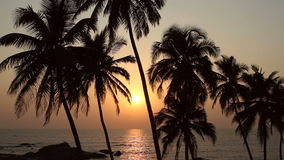 Five Palm Trees Silhouette At Sunset. Palm Trees Silhouette At Sunset stock footage