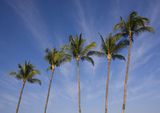 Five Palms Royalty Free Stock Images