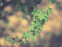 Five petaled flower-like leaves royalty free stock photos