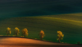 Five pilgrims. A laconic spring-summer landscape with a sunlit alley of chestnut trees, a valley with beautiful shadows and field Royalty Free Stock Photography
