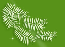Five Pine Branches Sparkling. Five curly pine branches with light sparkling on green background Royalty Free Stock Photography
