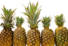 Five Pineapples Isolated. Stock Photo