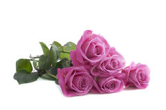 Five pink roses Stock Photography