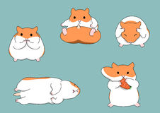 Five poses of hamster Stock Photos