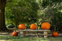 Five pumpkins in the front yard in the neighborhood in fall. stock photo