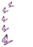 Five purple butterflies stock photo
