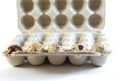 Five quail eggs in a carton box Stock Photography