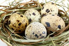 Five quail eggs in the nest Stock Images