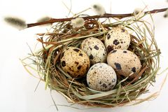 Five quail eggs in nest with willow branch Royalty Free Stock Image