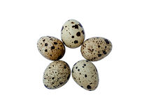 Five quail eggs Stock Photography