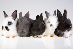 Five Rabbit Royalty Free Stock Photo