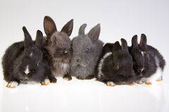 Five rabbit Royalty Free Stock Photos