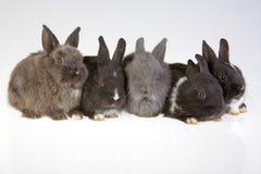Five rabbit Royalty Free Stock Photos