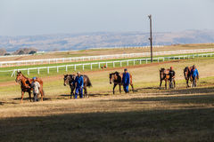 Five Race Horses Grooms Exercise Royalty Free Stock Images