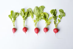 Five radishes Stock Photos