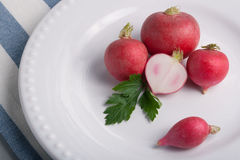 Five radishes on a plate Stock Images