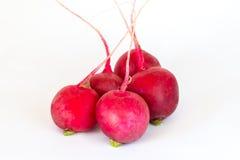 Five radishes  on white background Stock Images
