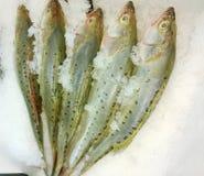 Five raw fish. Fresh raw fish at supermarket Royalty Free Stock Image