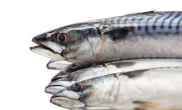 Five of raw, fresh mackerel lie on each other on a white background. Stock Photos