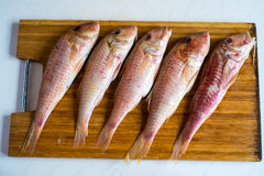 Five raw red fishes Stock Photo